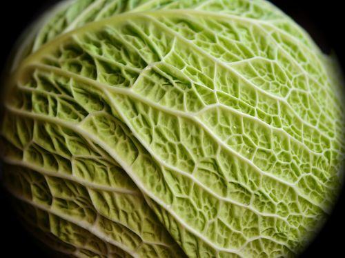 savoy kohl cabbage