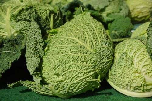 savoy cabbage savoy vegetables
