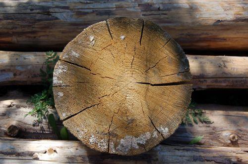 saw cut tree old tree