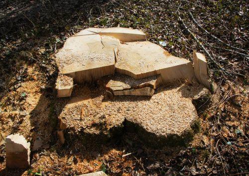 sawed off tree stump like