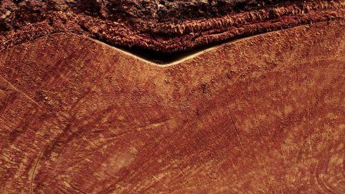 pjautinė mediena,žurnalas,žievė,mediena,mediena,tekstūros,gamta,fonas,tapetai