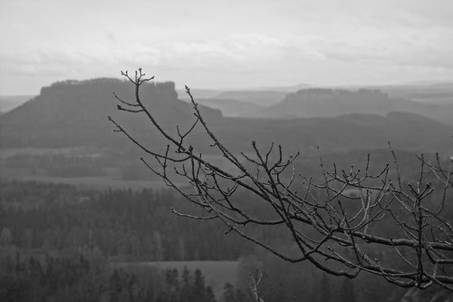 saxon switzerland  elbe sandstone mountains  lily stone