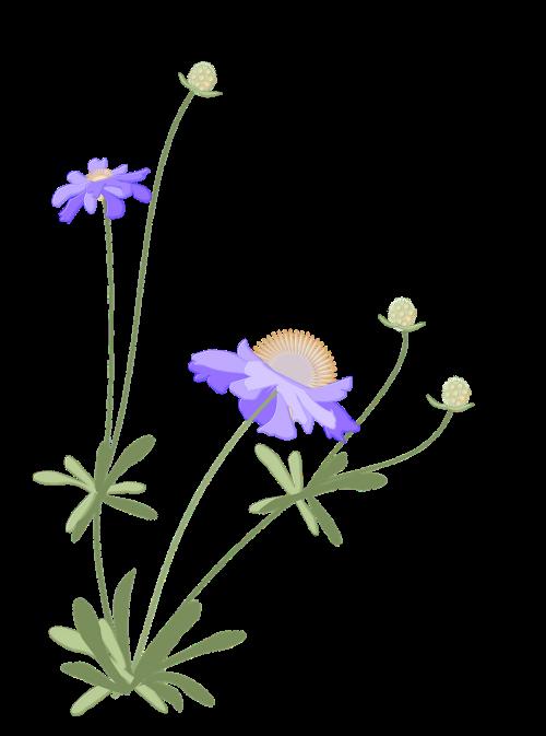 pūslelinė,japoniškas stilius,ruduo,gėlė