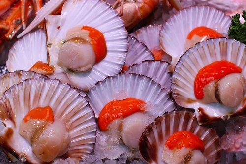 scallops  seafood  food