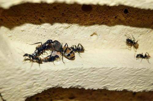 scaly ant ants ant queen