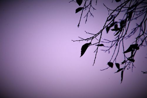 Scanty Leaves & Twigs Corner Border