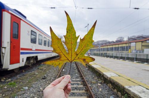 scene leaf transport