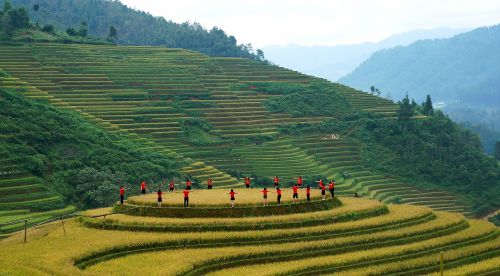 scenery north west paddy field