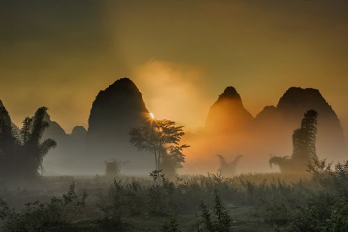 scenery the morning mist