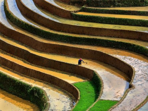 scenery terraces season pour water into the fields