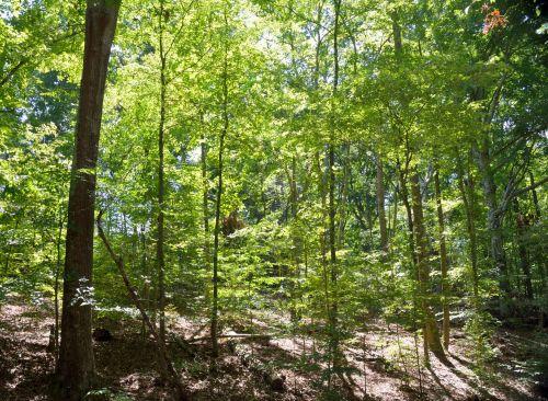 Scenic Woodlands Of Georgia, USA