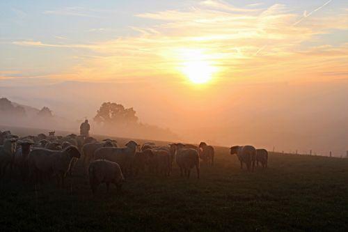 schäfer flock of sheep shepherd romance