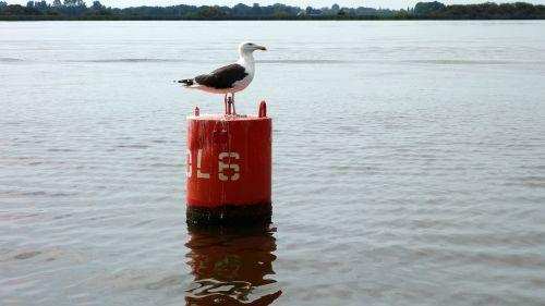 scheepvaartmarkering seagull marking