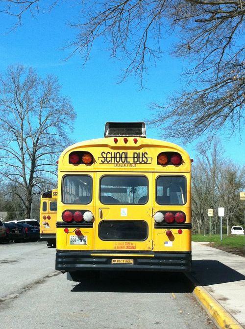 school school bus bus