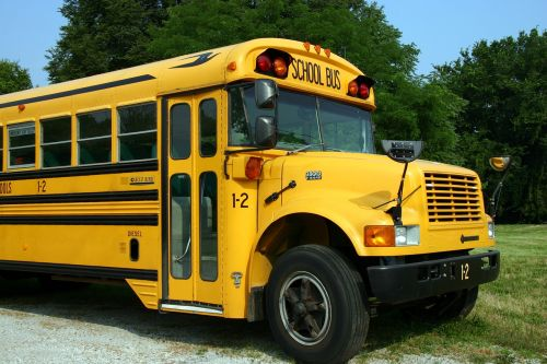 school bus bus vehicle