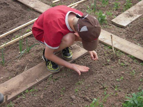 school garden sow students