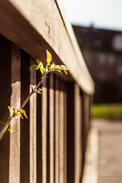 scion railing grow