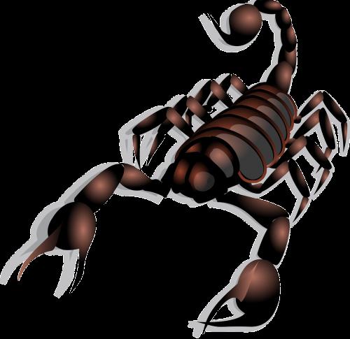 scorpion poisonous stinger