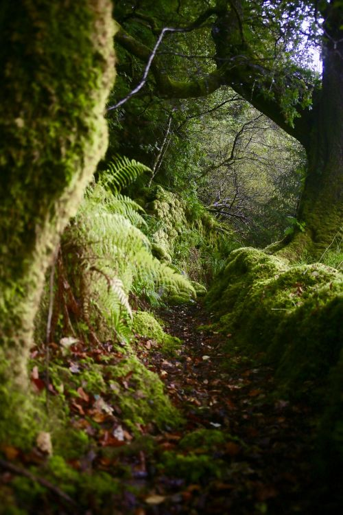 scotland moss moody