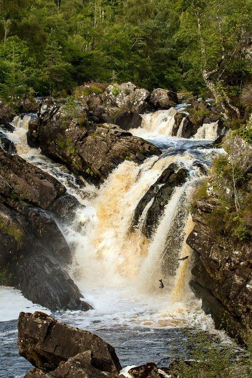 scotland  salmon  rogie falls