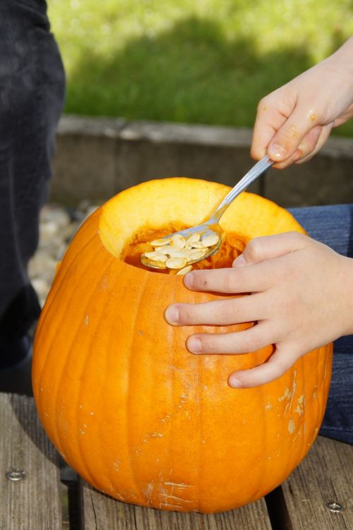 scrape off scoop out pumpkin