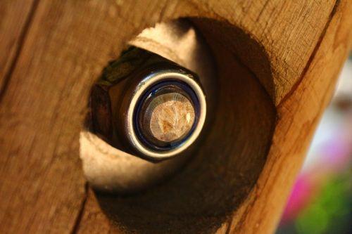 screw brown scaffold