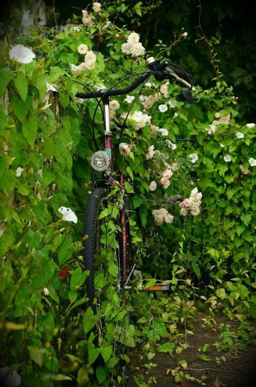 scrub overgrown bike