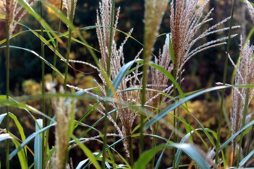 scrubs plants nature