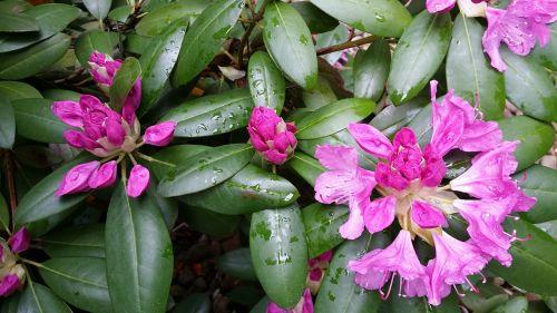 scrubs bushes spring