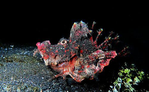 scuba diving macro