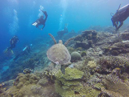 scuba diving scuba diving