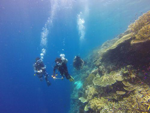 Nardymas,Scuba,nardymas,naras,koralas,rifas,povandeninis,vandenynas,jūra,atogrąžų,Indonezija,kakaban,kalimantanas,gamta,nuotykis,kelionė,koralinis rifas,sienos nardymas,hobis,aplinka,borneo