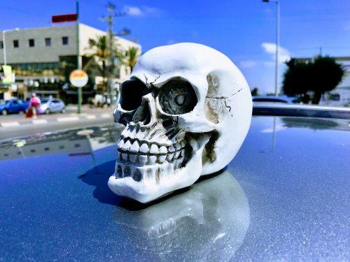 kaukolė,galva,baugus,skeletas