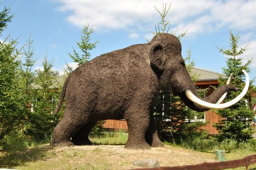 sculpture animal sculpture wool mammoth