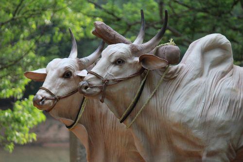 brahma cattle sculptures