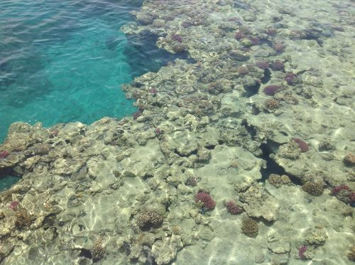 sea barrier reef corals