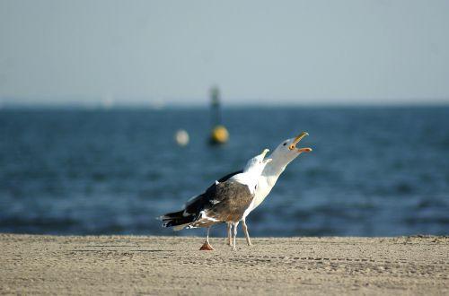 sea gull beach