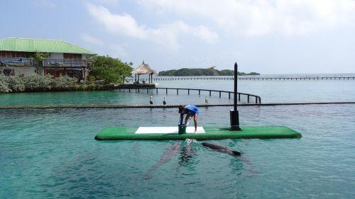 sea dolphins island