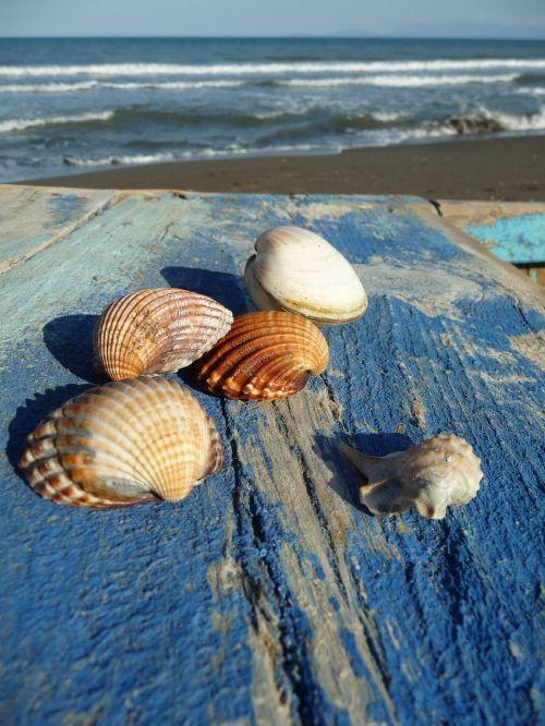 sea mussels mussel shells