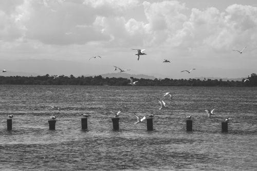 sea ocean seagull