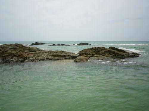 sea ebb reef