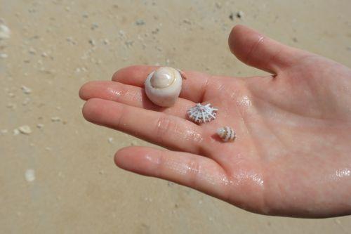 sea hand clam