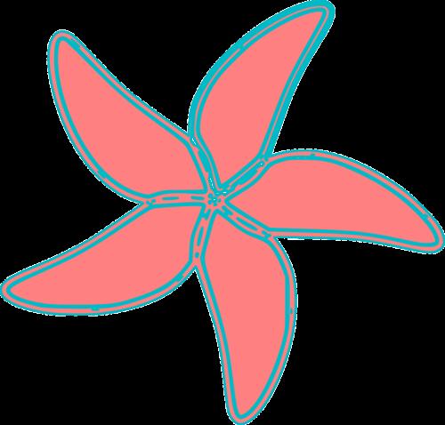sea starfish ocean