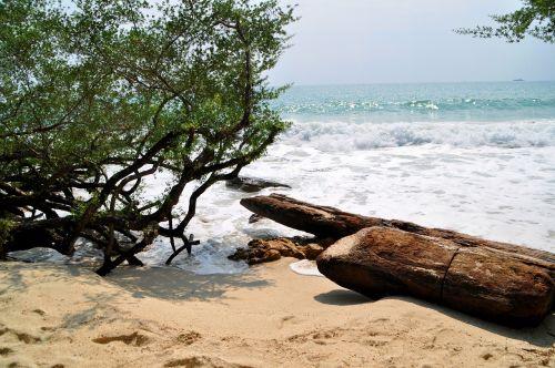 sea beach drift wood
