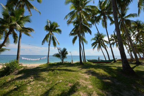 sea palm trees beach
