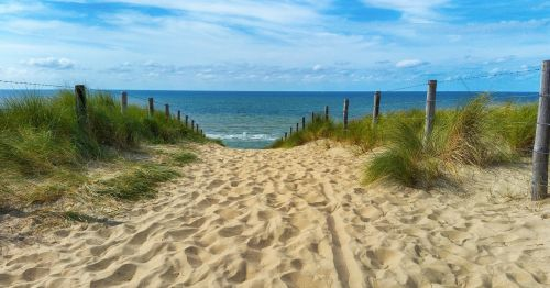 sea dunes dune grass