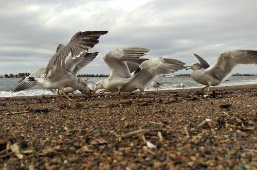sea beach sea gull