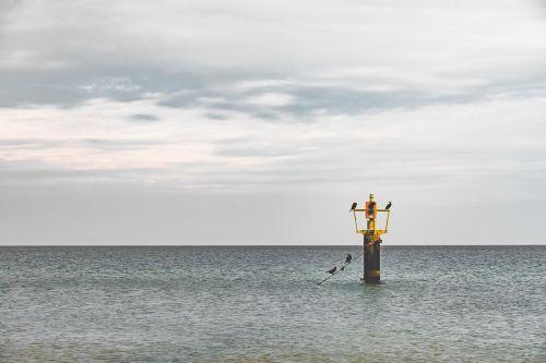 sea birds pole