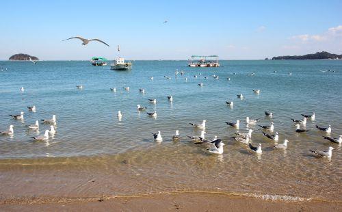 sea new seagull