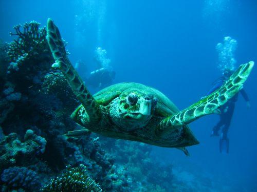 sea tortoise smolensk